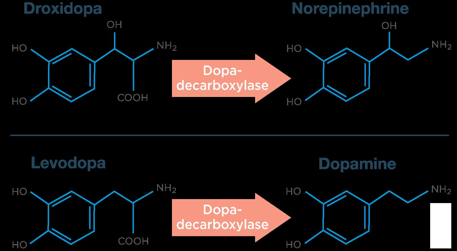 NORTHERA® (droxidopa) | Pharmacology